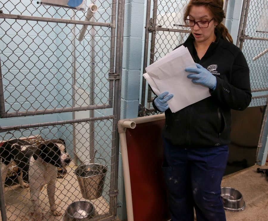 Rachel Wilson, a veterinary tech with DuPage County Animal Services, looks over papers for dogs that were rescued from a fire Monday morning at D & D Kennels near West Chicago.