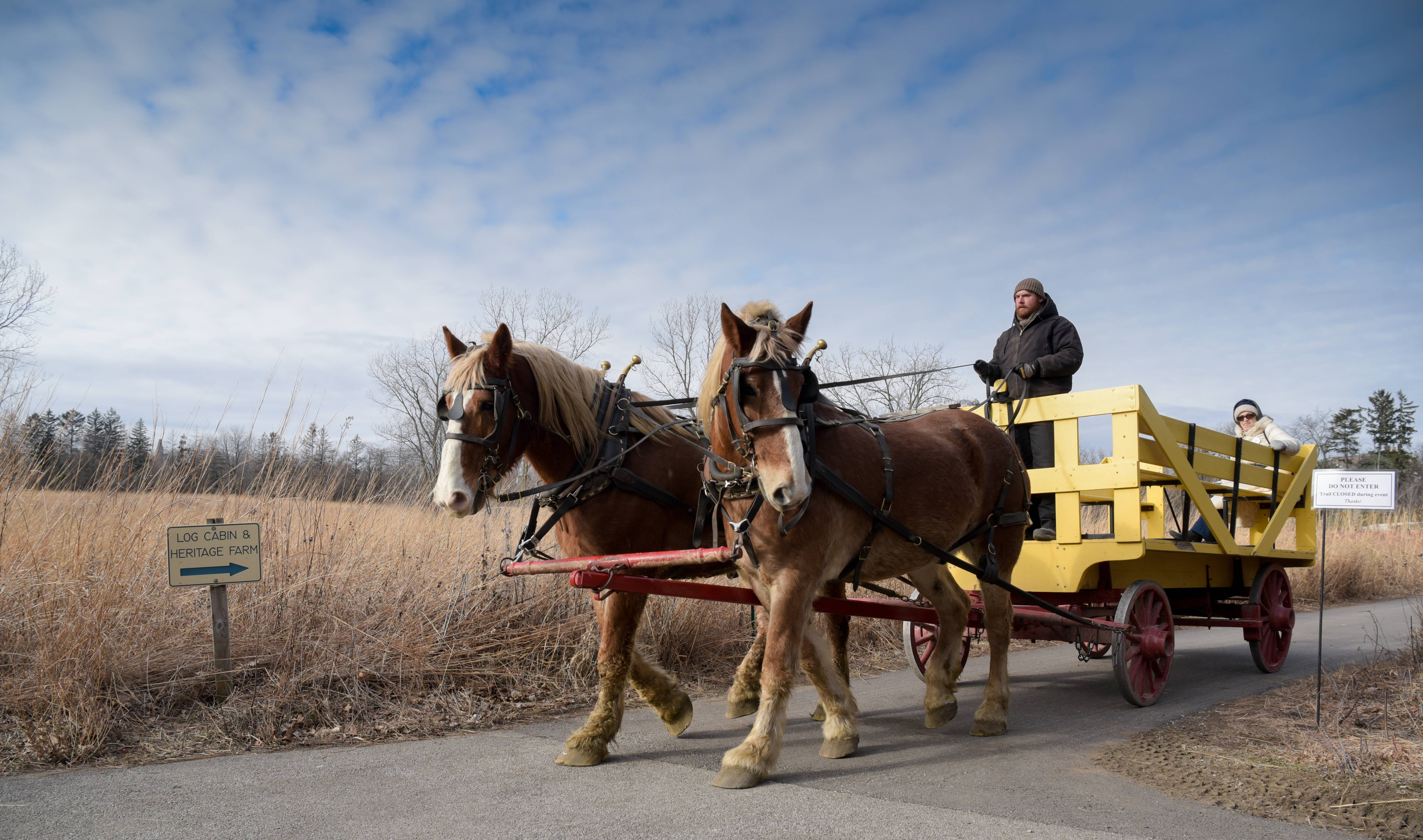 Horse-drawn wagon rides will be available during the annual Spring Valley Winter Fest in Schaumburg, Jan. 19-20.