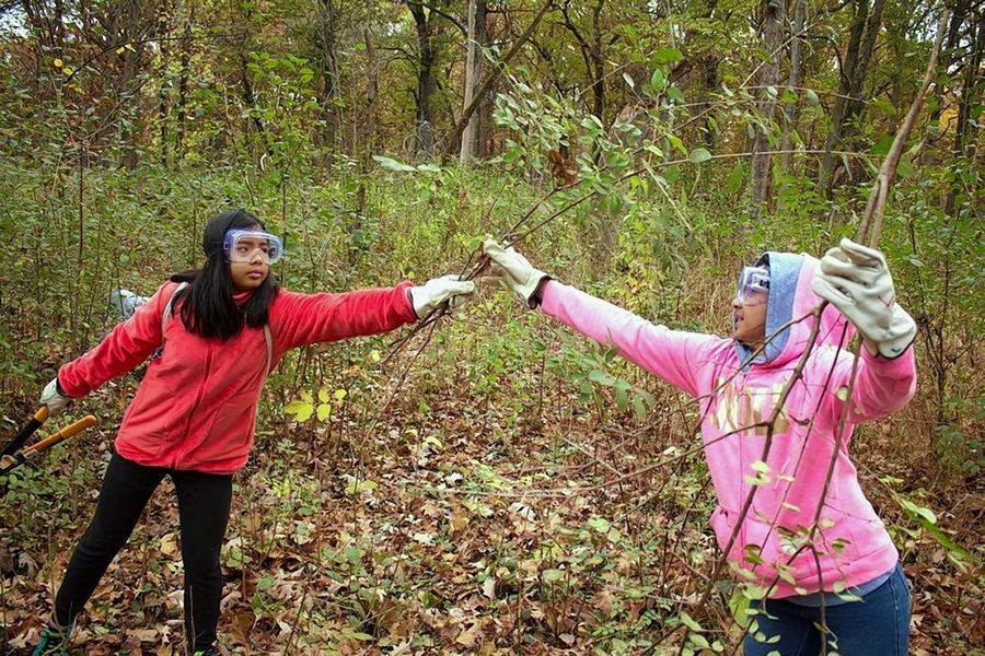 Students clear invasive buckthorn during a Lake County Forest Preserve District education program.