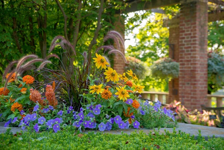 Consider Color Now In Planning Your Summer Garden