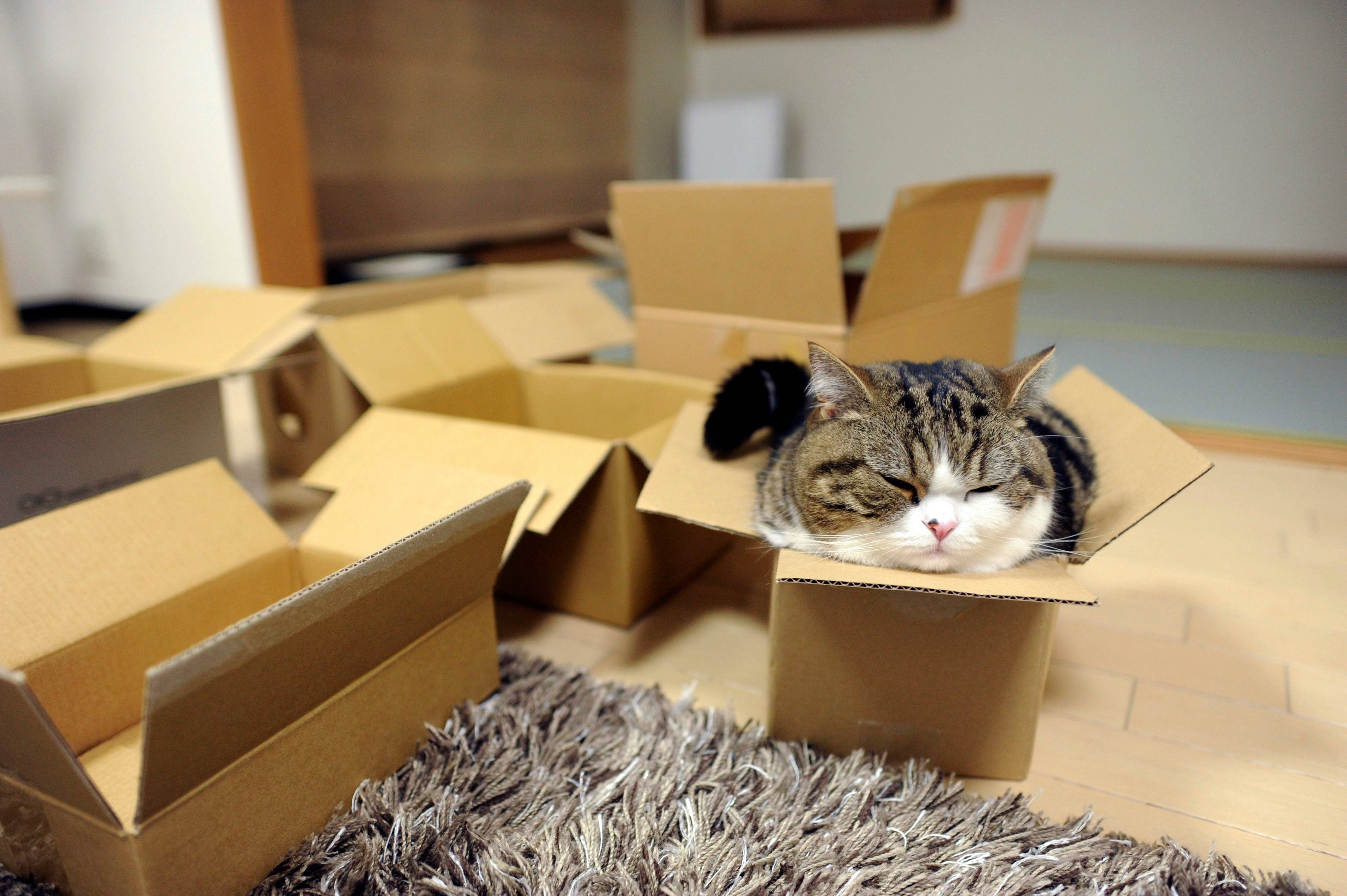 Maru the cat became an internet star thanks to the YouTube channel mugumogu, and some of his feline friends will become big-screen stars this weekend as part of a charity presentation of cat videos.