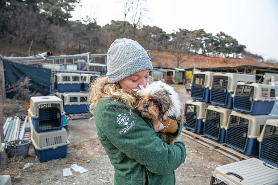 Kelly Donithan, senior specialist of disaster operations/animal protection and crisis response for the Humane Society International, kisses a dog at a dog meat farm in Hongseong-gun, South Korea, on Feb. 13. The operation is part of efforts to end the dog meat trade throughout Asia.