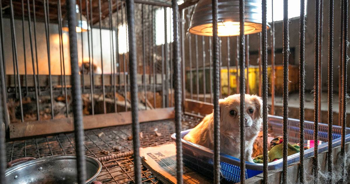 Dogs saved from South Korean meat farm find freedom, care in