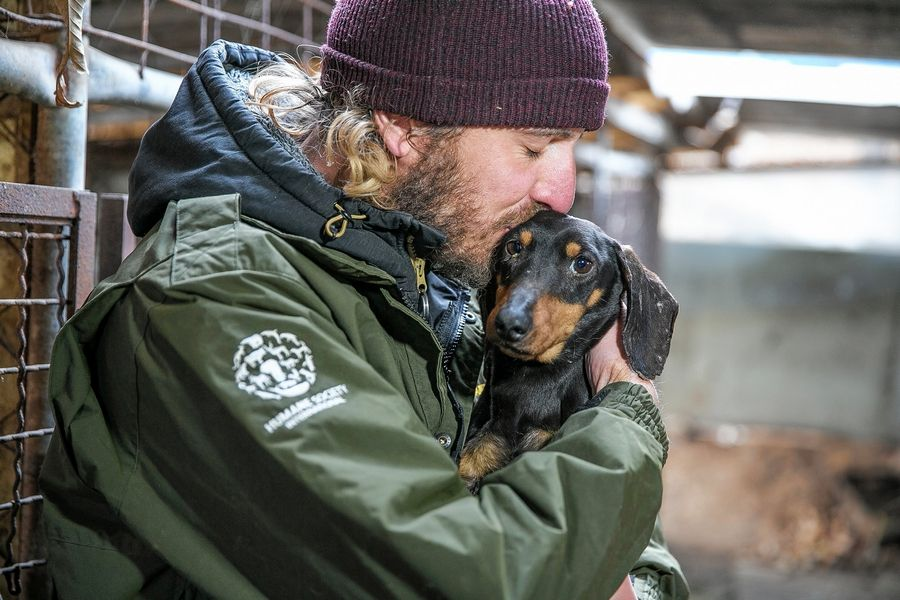Jack Finn-Kelcey, a field responder at HSI, kisses a dog at a dog meat farm in Hongseong-gun, South Korea, Feb. 13.