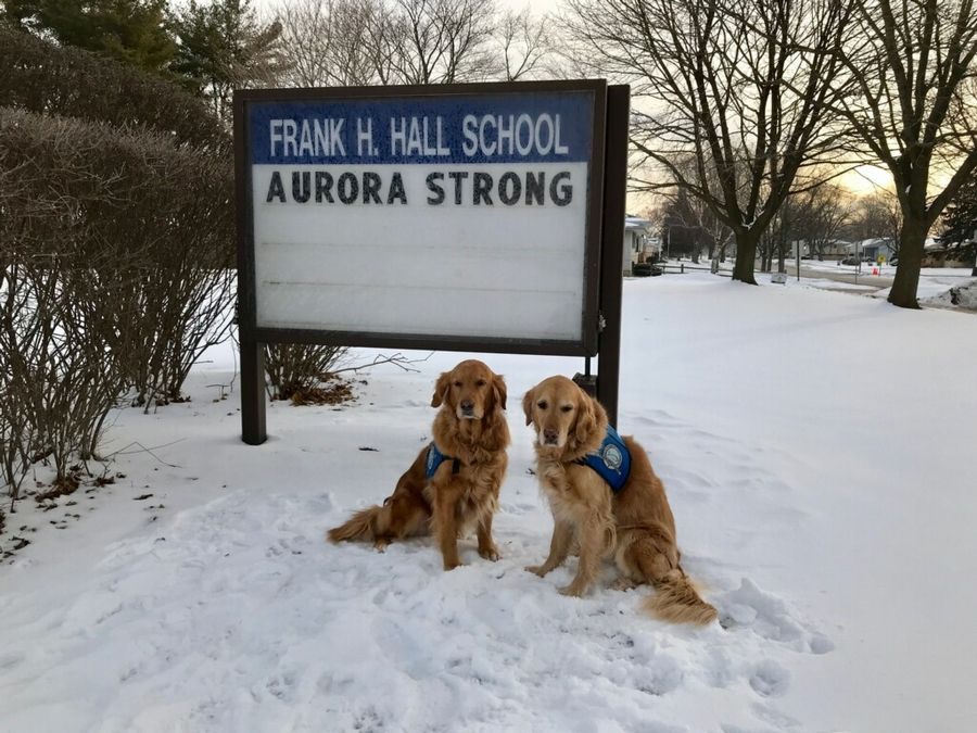 Golden retrievers from the Lutheran Church Charities K-9 Comfort Dog Ministry and their handlers recently visited schools, churches and first responders in Aurora.
