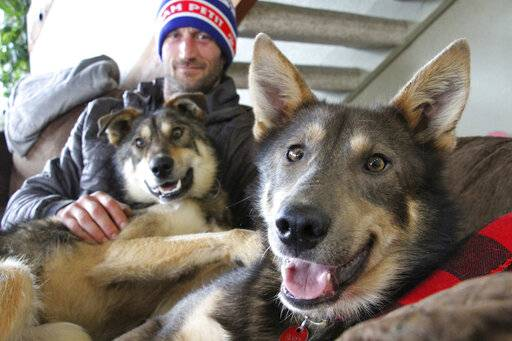 This Wednesday, March 20, 2019, photo shows Iditarod musher Nicolas Petit posing with two of his dogs in Anchorage, Alaska. The Frenchman Petit was in the lead of this year's race but his dog team quit running after he yelled at Joey, right, to stop picking on Danny, left. Petit says that isn't the reason the dogs quit running; instead, they quit about the same point the team got lost in a blizzard in the 2018 race. (AP Photo/Mark Thiessen)