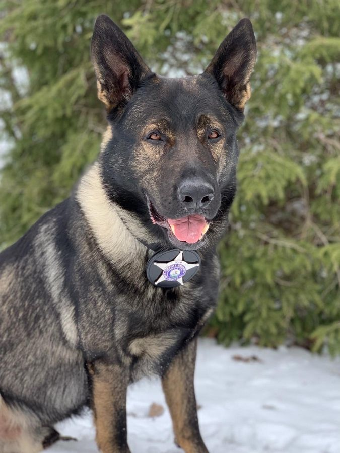 Lake County Sheriff's Department police dog Dax has been nominated as the 2019 National Law Enforcement K9 of the Year by The American Humane Hero Dog Awards
