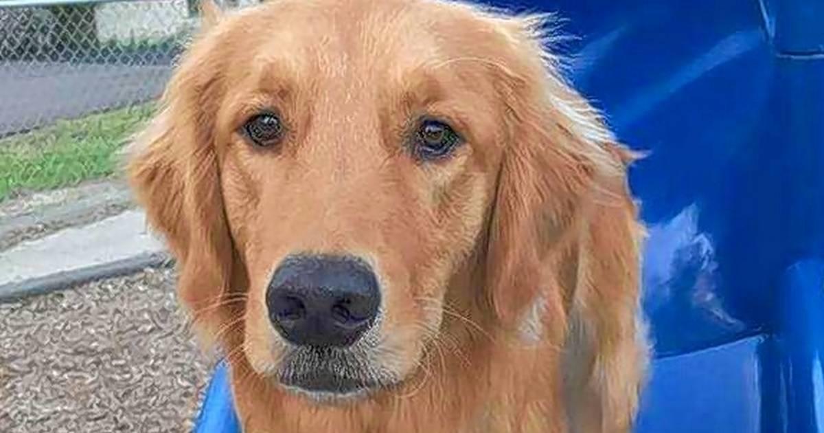 Meet comfort dogs at Lenten organ recital benefit March 31