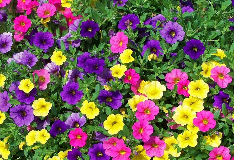 Enjoy Plants More By Choosing Annuals That Need Little Care