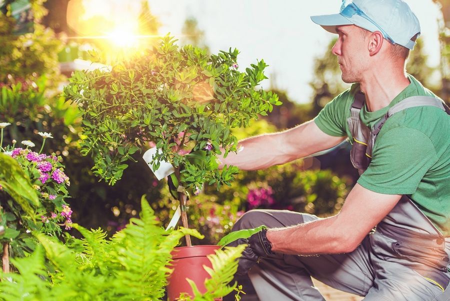 While you may be tempted to buy new plants for your yard, do a little prep work first to make sure your existing plantings are healthy.