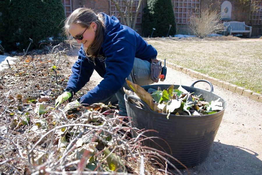 As new growth starts to emerge, work begins to cut back perennials and clean up plant debris at Chicago Botanic Garden.