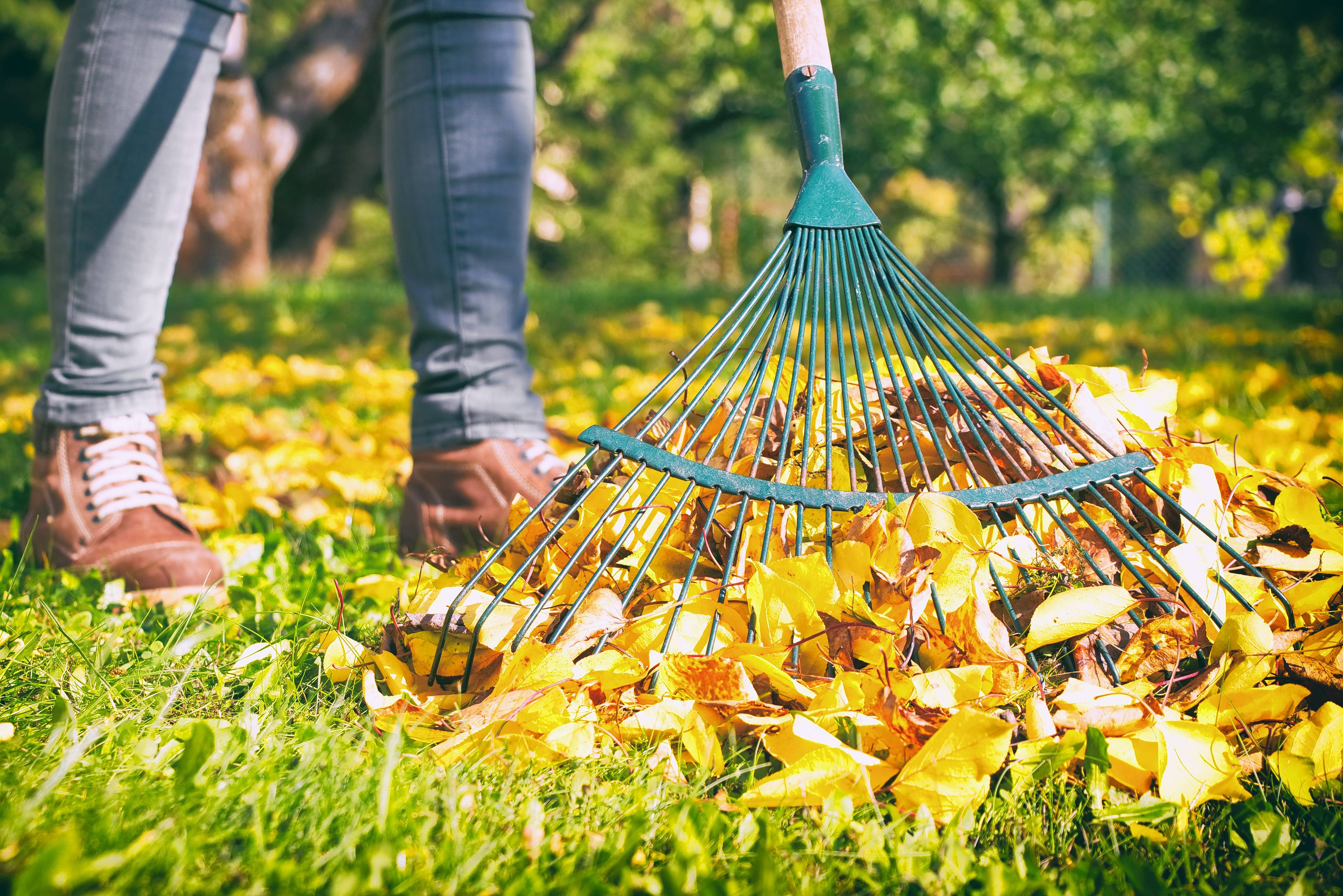 The Naperville City Council this week rejected a proposal from the public works department to scale back its leaf pickup obligations.