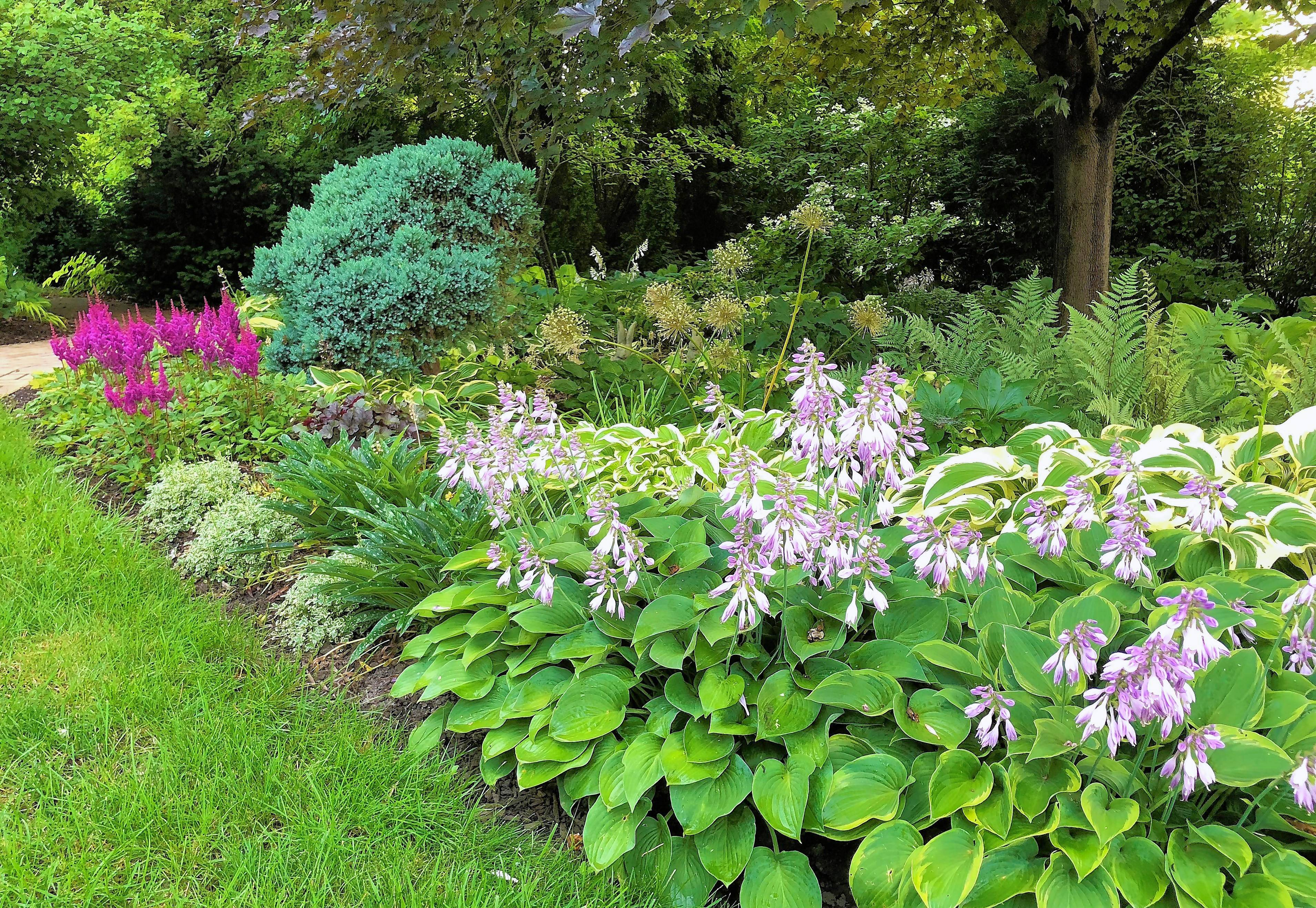 A wide variety of perennials grow under trees in one of the author's gardens.