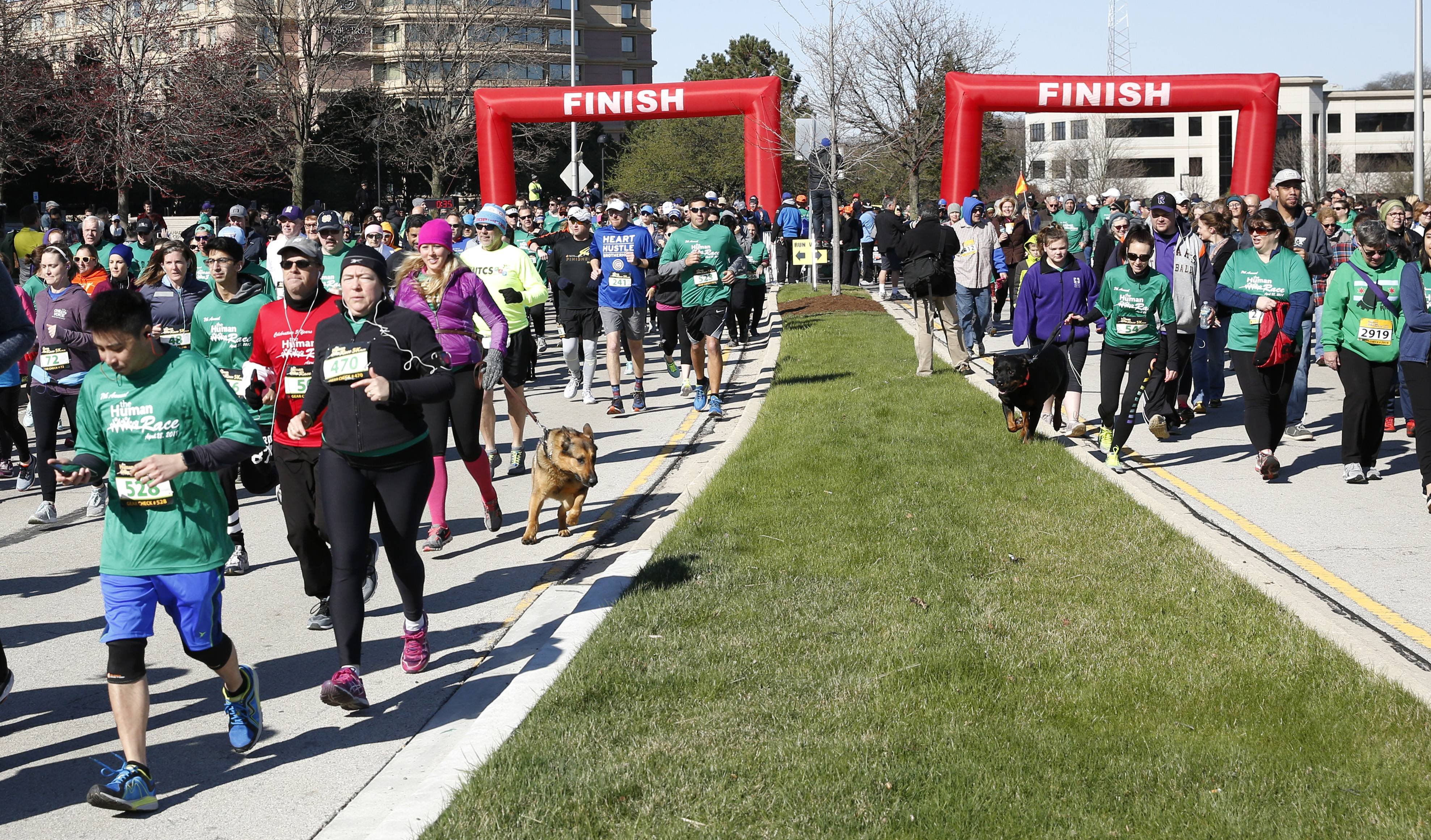 Roughly 1,900 runners and walkers are expected to participate Saturday in Giving DuPage's Human Race in Downers Grove. The 5K run and 2-mile fitness walk helps raise money for 55 charities.