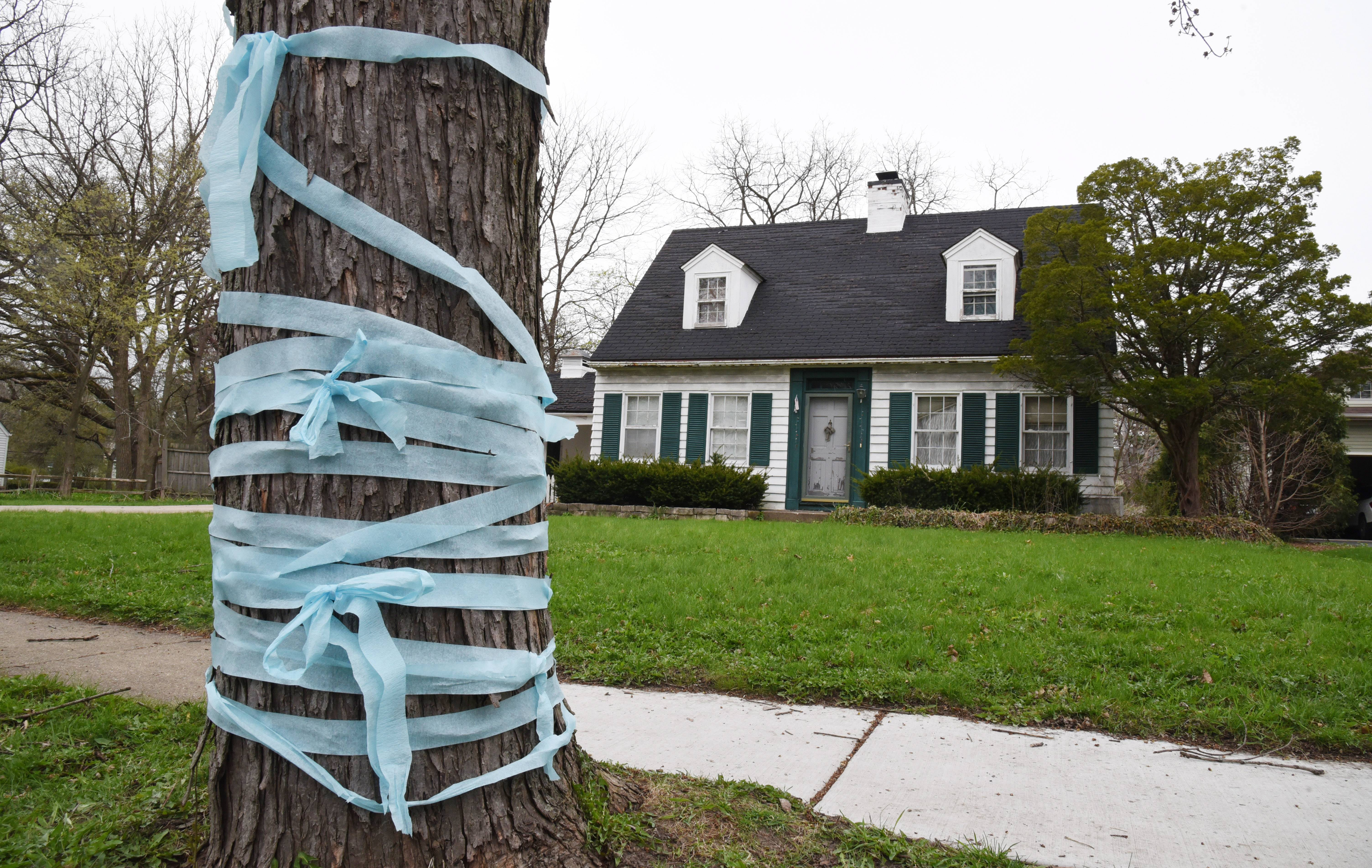 "Blue ribbon in support of Andrew ""AJ"" Freund is wrapped around a tree outside his Crystal Lake home. The 5-year-old's parents were charged with his murder."