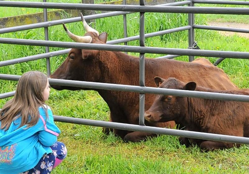 See rare livestock, poultry breeds at Garfield Farm show May 19