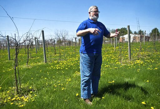 In this Friday, April 26, 2019 photo, Rudi Hofmann leads a tour at Sunset Lake Vineyards & Winery in rural Carlock, Ill. (Lewis Marien/The Pantagraph via AP)