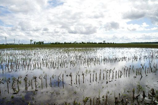 In this May 29, 2019 photo, a field is flooded by waters from the Missouri River, in Bellevue, Neb. Thousands of Midwest farmers are trying to make decisions as they endure a spring like no other. It started with a continuation of poor prices for corn and soybeans that fell even further as tariffs imposed by the U.S. and China ratcheted higher. Next came flooding from melting snow followed by day after day of torrential rains that made planting impossible or flooded fields where plants were just starting to emerge.