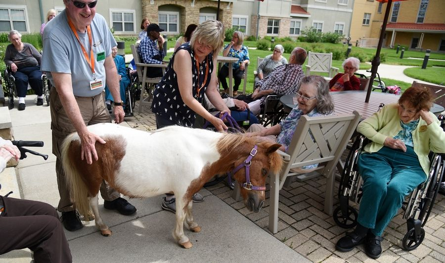 Diane Wlezien, center, and her husband, Michael Cussen, of Woodstock guide Sunny, their 14-year-old miniature therapy horse, around to visit residents of Clare Oaks Senior Living Community in Bartlett Thursday.