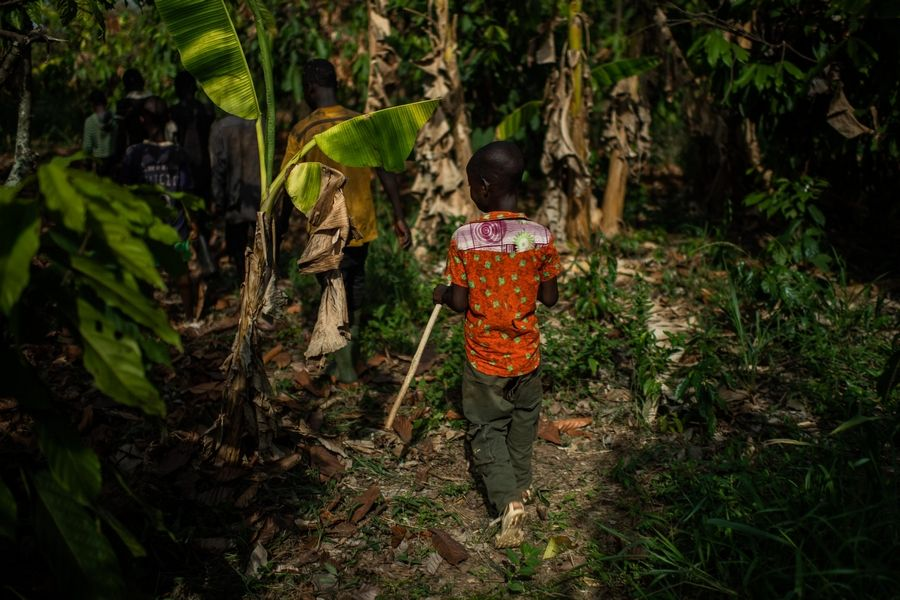 A young boy from Burkina Faso follows other children as they leave the cocoa farm where they work.