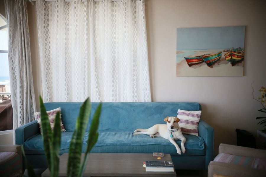 Carmen, the dog of Chad and Amy Wells, sprawls on a couch in the living room of their beach house in Rosarito, Mexico.
