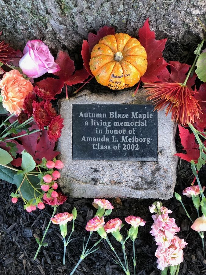 Lee Ann Meiborg says she frequently visited the tree and plaque that honored her late daughter, Amanda.