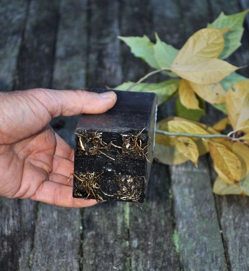 Root-bound plants need special measures