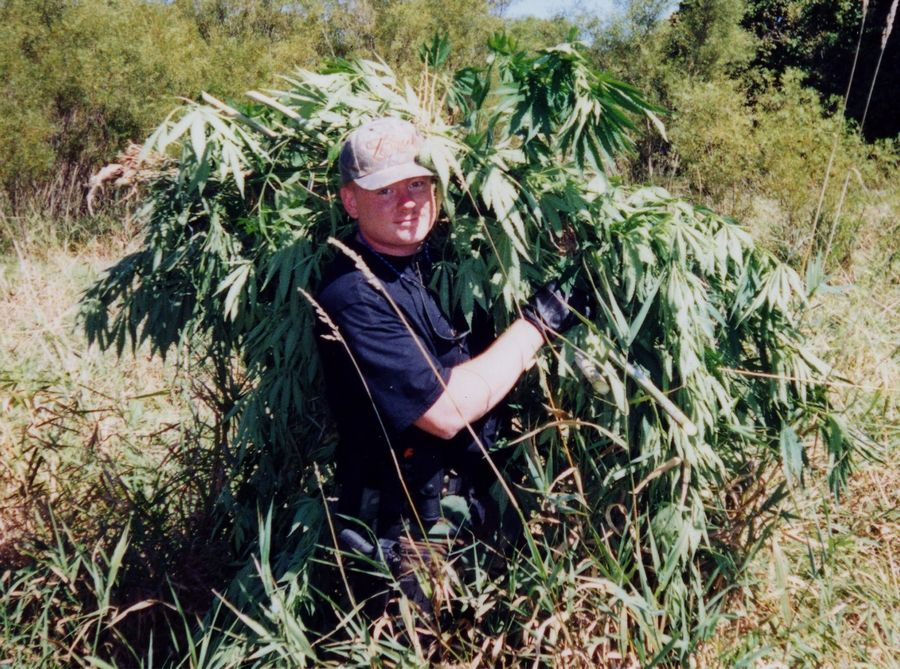 In 2002, agents of the Lake County Metropolitan Enforcement Group carried stacks of marijuana plants cut from a field near Wadsworth. Grown during World War II, industrial hemp still grows wild.