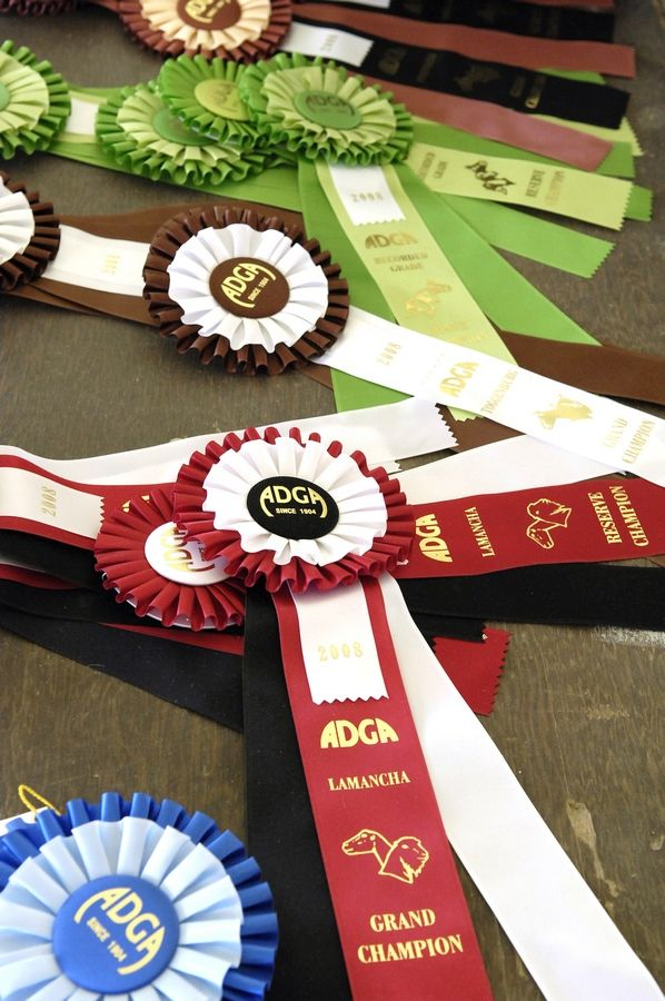 During the Kane County Fair, hundreds of ribbons will be awarded for 4-H project displays and animal shows.