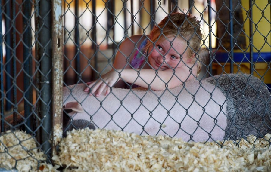 Zoe Johnson, 9, of Sycamore shares quiet time with one of her competition hogs Thursday at the Kane County Fair in St. Charles.