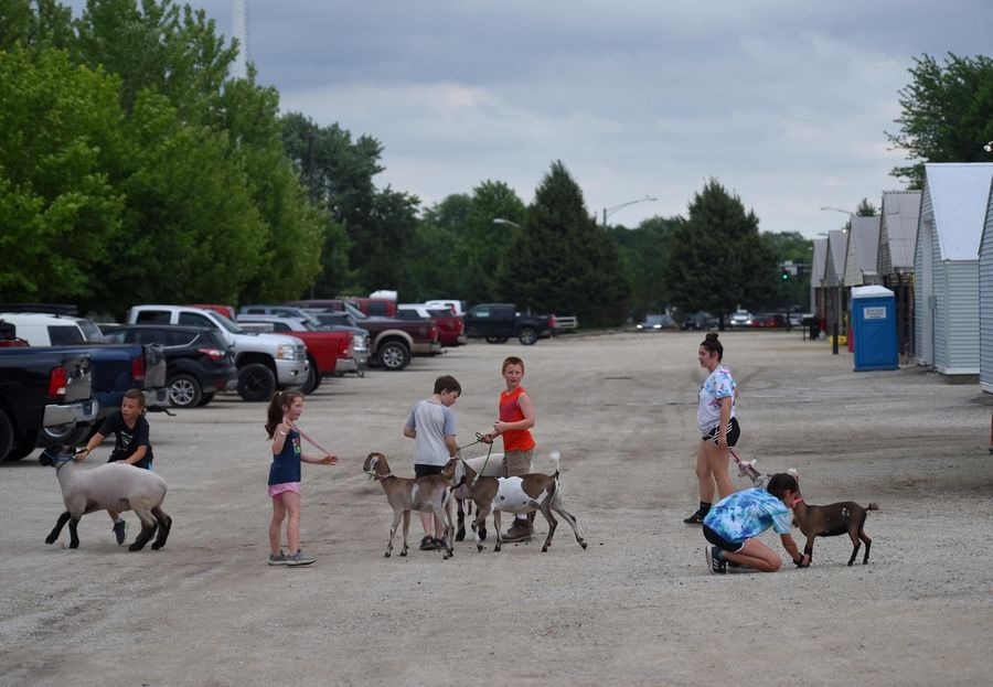 Kids exercise their goats and sheep Thursday at the Kane County Fair in St. Charles.