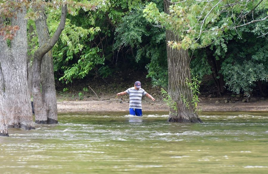 A fisherman wades into the Fox River at a spot that is usually dry land Saturday in Algonquin.