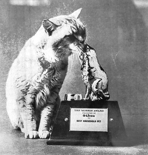Always calm and a little aloof, Morris the Cat checks out his likeness on a trophy.