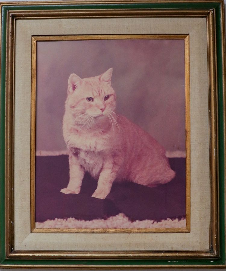 This portrait of Morris the Cat was taken during a 1974 visit to Indianpolis. It now hangs in the Hinsdale Humane Society, where Morris was discovered.