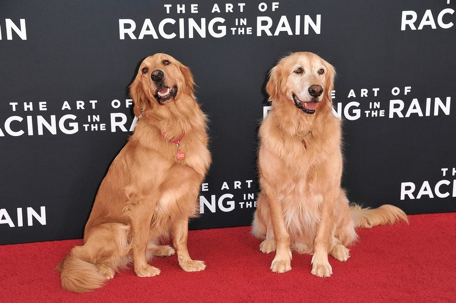 "The Art Of Racing In The Rain: Bestselling Author Of ""The Art Of Racing In The Rain"" To"