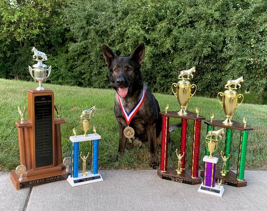 Police dog Dax wins more awards, finds missing man