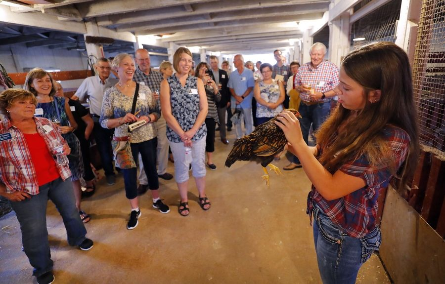 Steve Lundy/slundy@dailyherald.com12-year-old Bell Yarc of Libertyville shows guests a show chicken during a tour as The Lake County Farm Bureau held its first legislative dinner and reception at Yarc Farms around Libertyville Wednesday.