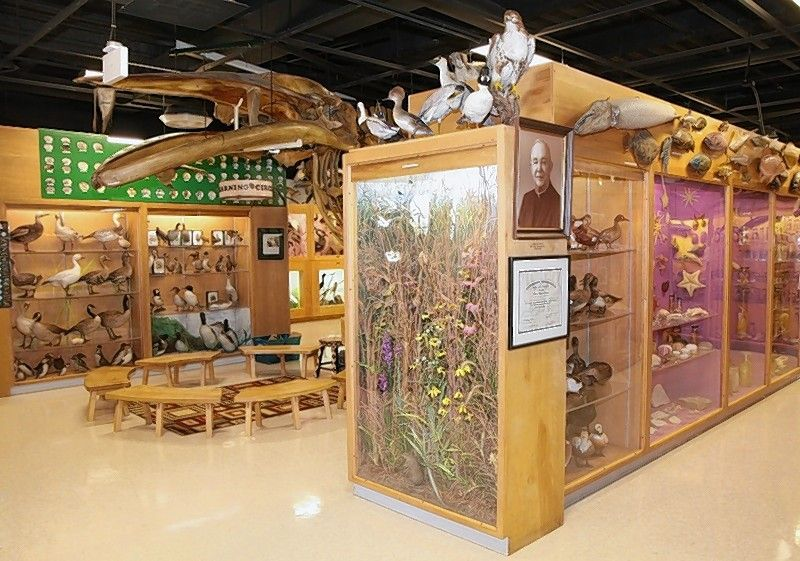 The Jurica-Suchy Nature Museum in Lisle has more than 3,000 specimens on display. The collection represents zoological, botanical, archaeological, and geological specimens from around the world.