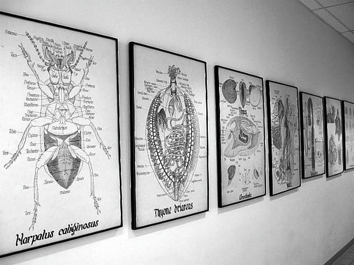 The Jurica Biology Charts are a historic collection of original anatomical illustrations created by the museum founders, Frs. Hilary and Edmund Jurica, O.S.B., in the early 1900s. The grant will allow the museum to uphold best practices for the preservation of these charts.
