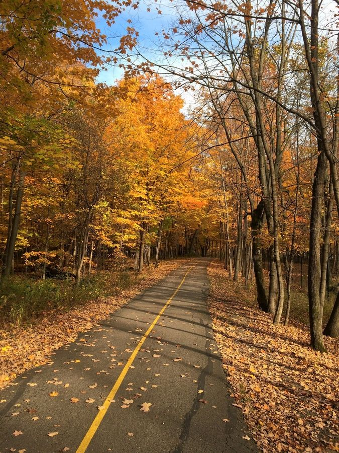 The Busse Woods bike trail comes with great orange and yellow colors in the fall, especially on the east side near and along Arlington Heights Road north of Higgins Road.