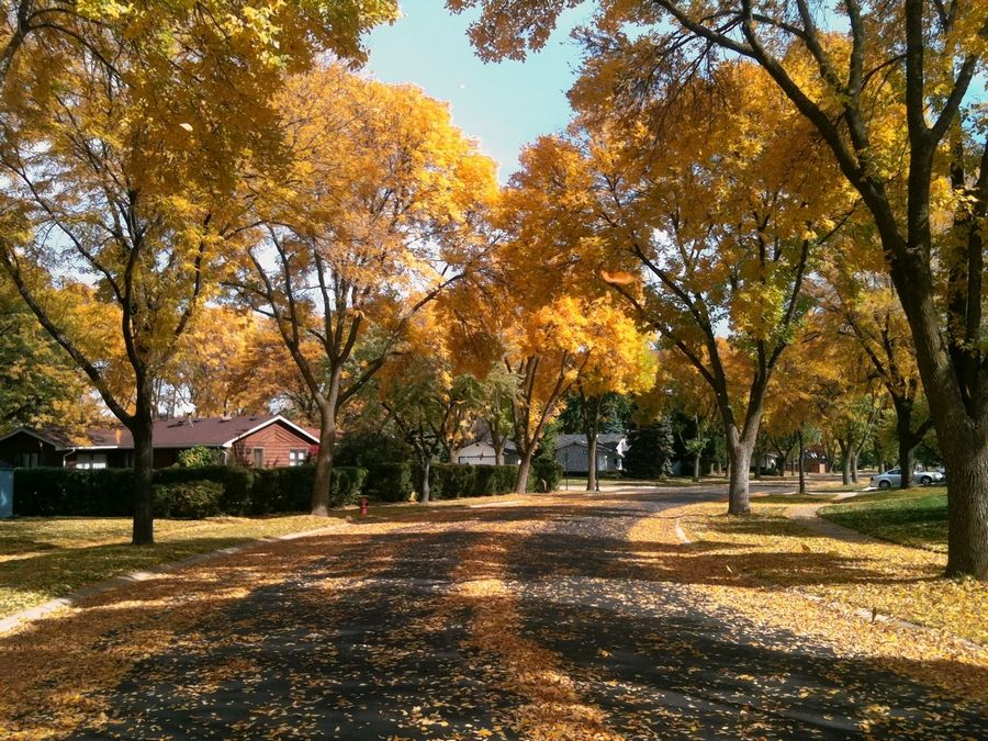 Great fall colors can appear on bike routes right in your neighborhood, like here on White Trail in Elk Grove Village.