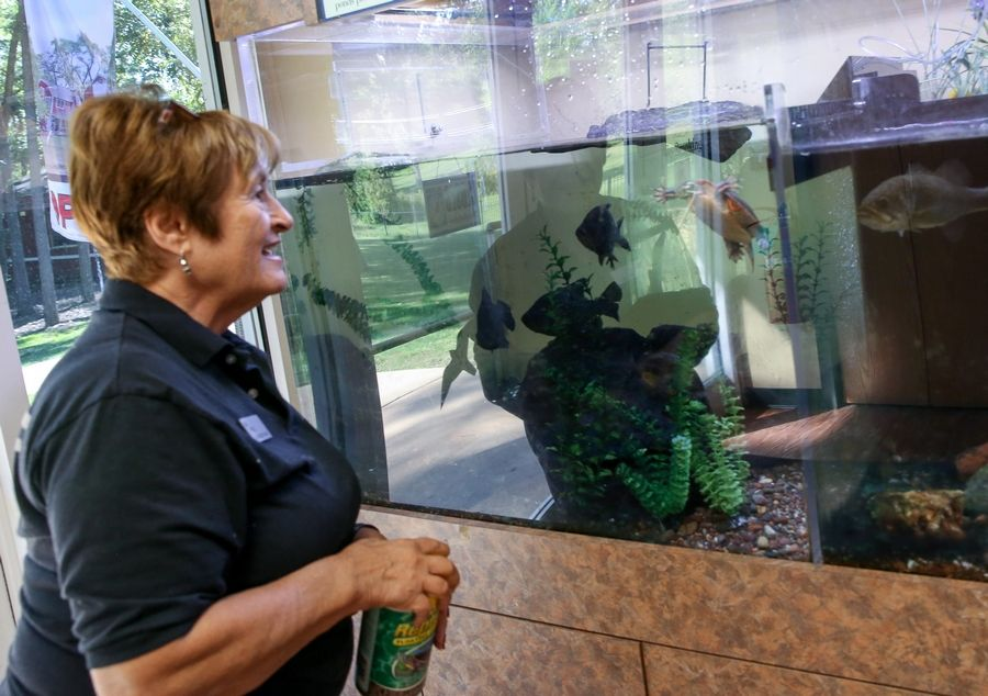 Marlene Pasdo gets ready to feed the fish and a box turtle on display in the nature center. The center offers a variety of programs for kids, Scouts and families.