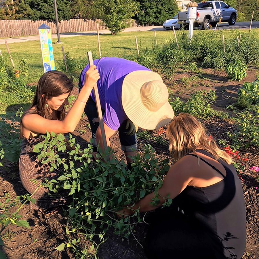 The Roots Garden in Palatine provides an average 120 servings of vegetables every week during growing season to local families in need.