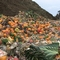 How Lake County is trying to keep food scraps out of landfills