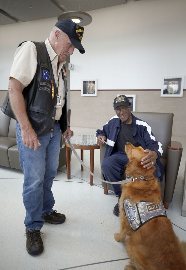 Vietnam veteran Bob Royce of Schaumburg volunteers in many ways, including as the handler of comfort dog Blitz for Lutheran Church Charities Kare 9 Military Ministry. He and Blitz talk to Johnny Parker, an Army veteran who lives in Chicago, while visiting Hines VA Hospital Wednesday.