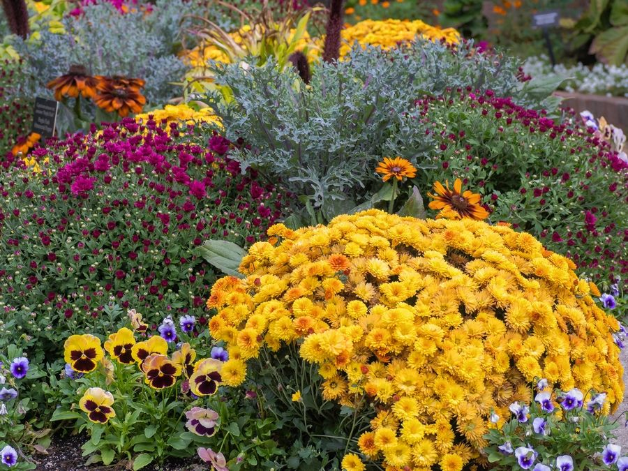 Plant mums and asters to keep the colorful flower show going through October.