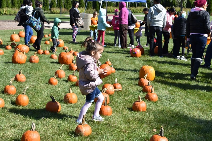 Visitors can choose their own pumpkin to decorate at Pumpkin Fest, October 12 in Vogelei Park, Hoffman Estates. The two cans of food donation per pumpkin supports the Schaumburg Food Pantry.
