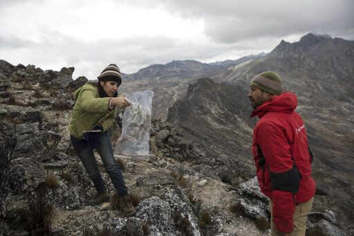 In this Feb. 19, 2019 photo, scientist Johanna Bracho shows Eloy Torres a plant sample during a mission to study the Andean ecosystem known as the paramos _ a mist-covered mountain grassland that lies between the top of the treeline and the bottom of the Humboldt glacier, in Merida, Venezuela. Throughout history, glaciers have waxed and waned numerous times. But the rapid pace of glacial retreat over the past century and a half, accelerated by human activities and the burning of fossil fuels, creates a new urgency _ and opportunity _ for scientists to understand how freshly exposed rock forms new soil and eventually new ecosystems.