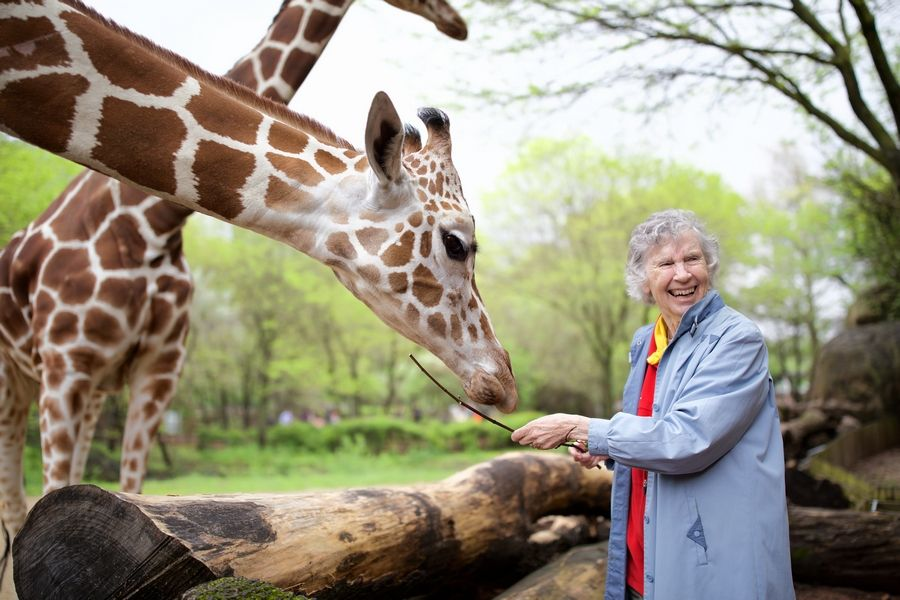 "Anne Innis Dagg, who went to South Africa in 1956 to study giraffes, stops by Brookfield Zoo near Chicago for a visit. On Friday, Oct. 11, the film ""The Woman Who Loves Giraffes,"" will be shown, followed by Q&A with Dagg and the director."