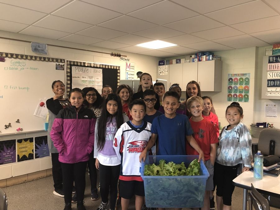 Students in the sixth-grade class at Goodrich Elementary School in Woodridge learn about hydroponic technology, growing over 20 pounds of lettuce this school year.